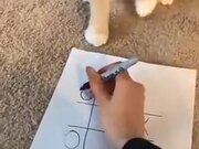 Kitty Playing Tic Tac Toe