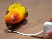 A Parrot Expressing Surprise