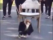 The Boss Monkey