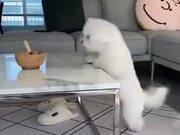 A Gymnastic Dog