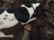 The Truffle Hunters Official Trailer