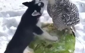 A Love Between Dog And Owl