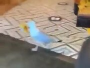 Bird Stealing From A Shop