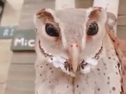 An Owl You Have Never Seen Before