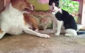 When A Dog Is Playing It Rough With Kitty