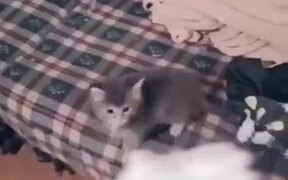 When This Kitten Loves A Food