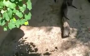 Otters Chasing A Big Butterfly