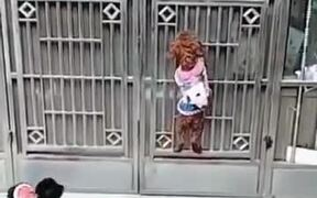 If Mission Impossible Was Created With Dogs