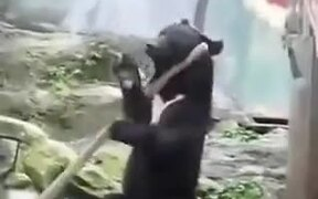 A Bear Knows How To Handle A Staff