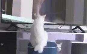 White Cat Spreading Bad Luck