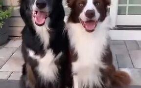 Two Dogs Best Friends