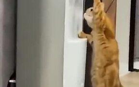 A Cat Using A Water Dispenser