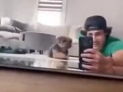 Dog Sneaking On Human