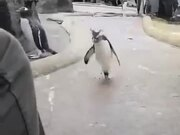 Who Said Penguins Don't Dance?