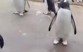 Who Said Penguins Don't Dance?