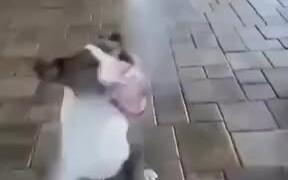 Dogs Love Spray Water