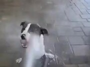 Dogs Love Spray Water