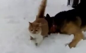 When Cat And Dog Are Out On The Snow