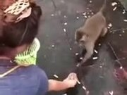 Greedy Monkey Slipping