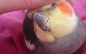 Bird Receiving Ultimate Pleasure