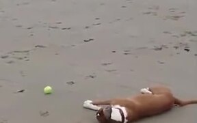 Dog With An Unwanted Summersault