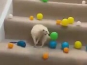 How To Trick A White Ferret