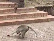 Monkey Drawing Circles