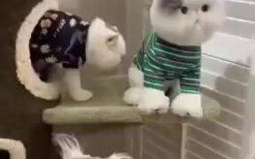 Cat Jealous Of Cat Doll