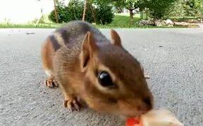 A Very Lucky Squirrel