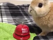 Bunny Rings A Bell For...