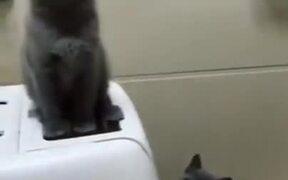 Cutest Dancing Cat Duo