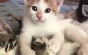 Kitten Slurping On Another Cat