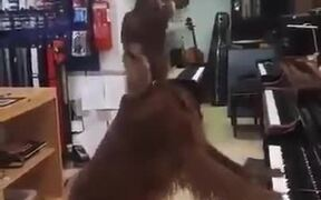 Dog Singing In A Store Playing Piano