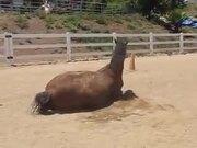 Someone Said Horses Are Majestic