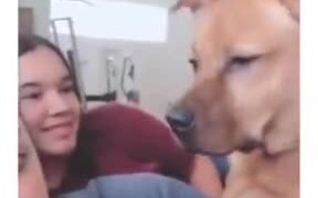 Dog Loves A Story By A Human