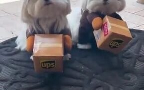 Watch The Cutest Delivery Animal Ever