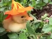 Cutest Natural Hat For A Duckling