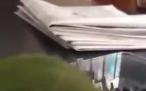 Clever Cockatiel Opening A Plastic Box