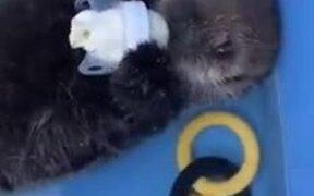 Cute Otter Baby Drinking Milk