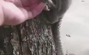 Kind Human Helping Lemur Monkey