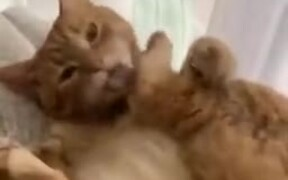Cat Kicking Own Face