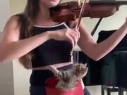 A Violin Session With A Kitten