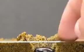 Time-Lapse Of A Seem Germination