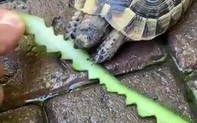 Creating Art While Feeding A Tortoise