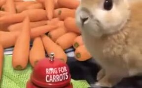 A Carrot Bell For Bunny