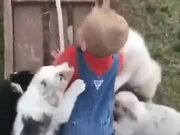 A Litter Attacking A Boy