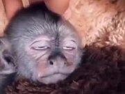 Monkey Kid Receiving Great Head Massage