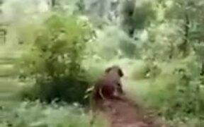 A Baby Elephant Enjoying A Slide
