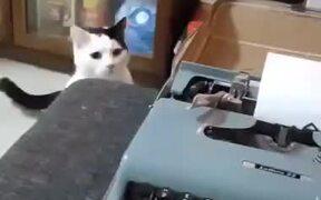When Cat Hates A Typewriter