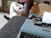When Cat Hates A Typewriter